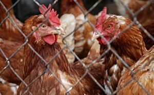 ECO Animal Health Group