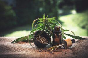 Sativa Wellness Group Share Price